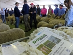 australian-sheep-and-wool-show-2016-by-outcross-media-4
