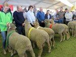 australian-sheep-and-wool-show-2016-by-outcross-media-5