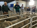 gdc-western-australian-tour-ram-breeders-workshop-at-muresk-institute-wa-2