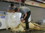 trainee-shearer-nicholas-murray-and-trainer-dayne-west-by-outcross-media