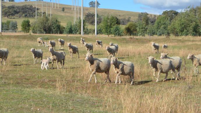 ewes the land