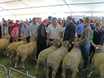 australian-sheep-and-wool-show-2016-by-outcross-media-10