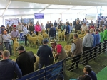 australian-sheep-and-wool-show-2016-by-outcross-media-2