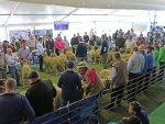 australian-sheep-and-wool-show-2016-by-outcross-media-8