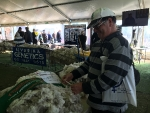 ian-pilgram-mini-may-inspects-the-display-of-dohne-fleeces-at-bendigo-by-outcross-media
