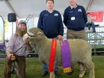 murray-rogerson-stirling-dohne-stud-exhibited-the-reserve-grand-champion-ram-judges-andrew-bouffler-lockhart-and-barry-lang-oberon-by-outcross-media