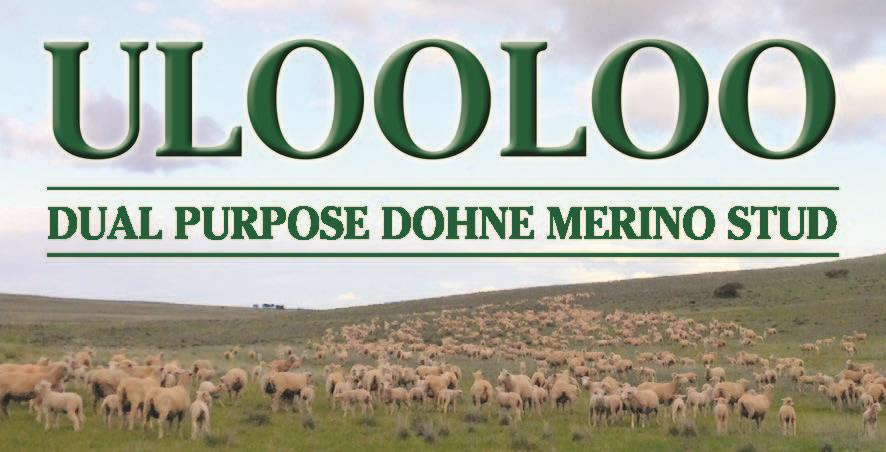 Ulooloo fb logo jpg