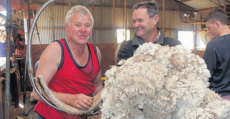 Producer wool