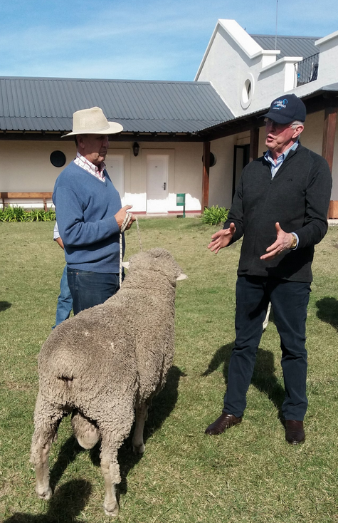 Dohne Workshop in Durazno, Uruguay. Allan Casey talks about ram inspection and Dohne standards with a ram from La Pastoral (Gabriel Capurro)